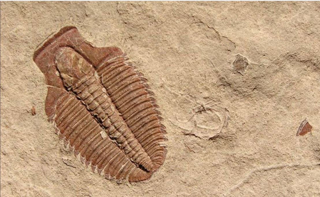 What should you do if you find a fossil on Utah land?