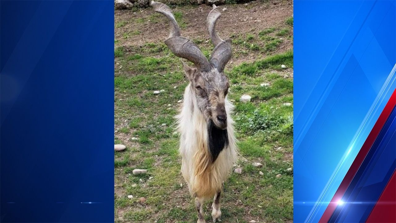 Hogle Zoo reports death of exotic animal