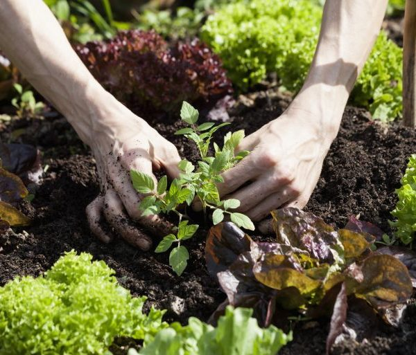 When it comes to both financial ambitions and garden plans, big goals can take years to accomplish.